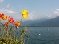 Fleurs à Montreux