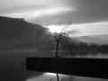 Arbre du Bourget à l\'aube