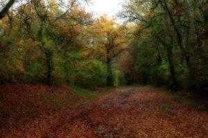 L'effet Orton : sublimer l'automne !